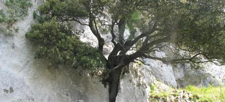 arbol roca